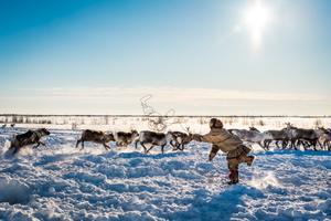 The Nenets Lasso
