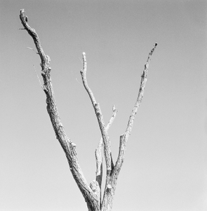 Dead Forest 9