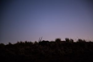 Night comes - deer comes