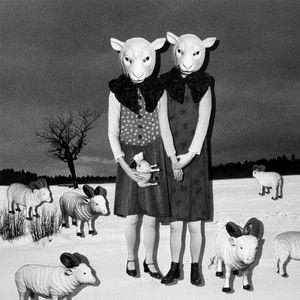 The fallen sheep