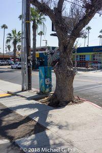 Utility Pole and Tree