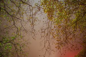 Night Trees of New York: Bryant Park Red Curtain
