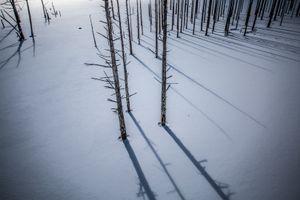Frozen Black Pond