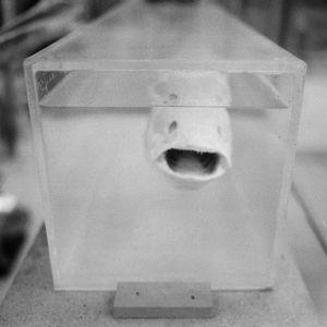Eel in Formaldehyde