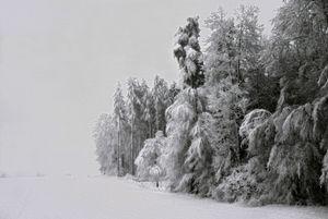 Niege, Zurich, Portraits of Trees