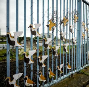 Tangled birds