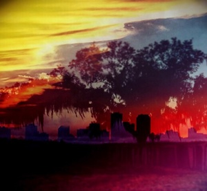 Battlefield Oak, St. Bernard Parish, Louisiana - Double Exposure with Downtown New Orleans