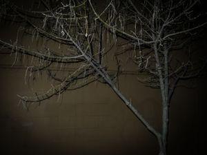 Winter Tree 2. © Ross Duncan