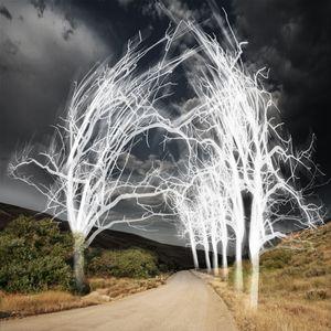 """© Ellen Jantzen - """"Enlightened Path"""""""