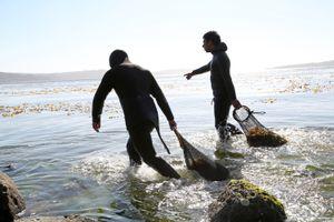 Seaweed Collectors