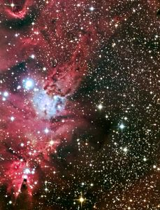 Foxfur and Christmas Tree Nebula