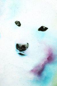 [Kojiro] It is a kind of puppy daddy of two dogs    © Takashi Kuraya