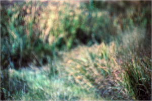 Twilight Grassland #1