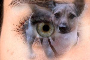 Through my eyes 1