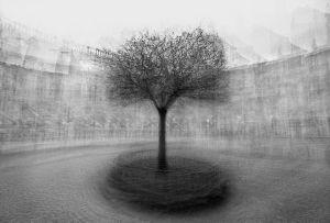 stadtbaum#2