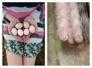 Eggs & Fur Balls