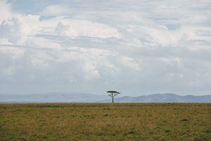 maasai mara-lone tree