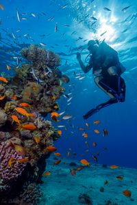 Coral reefs of Eilat, Red Sea