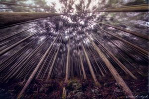 Seductive woods