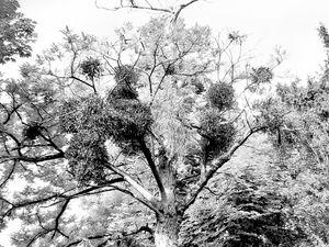 Trees 23