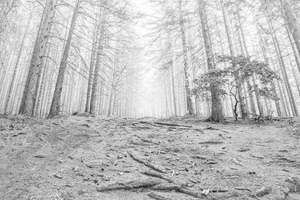 The Dying Forest #01