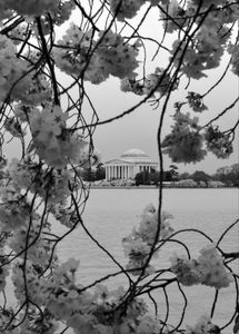 Jefferson Memorial, Washington, D.C., Seen Through Cherry Blossoms
