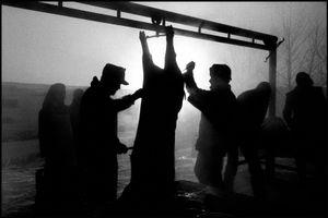 © George Webber - Butchering hogs, 2000