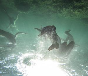 The Renaissance of luminous creatures - Dagon