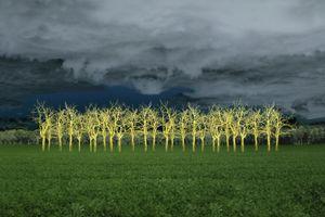 """© Ellen Jantzen - """"In The Field Of Gold"""""""