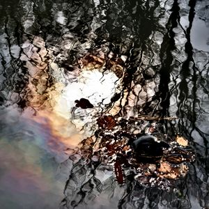 Hidden Natural Art |  An amazing mixture of mirroring of trees, of breaking light in rainbow colors on the water and the face of a white dog for people with fantasy.