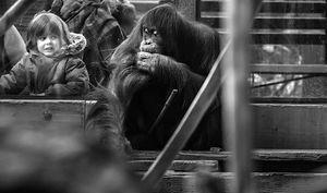 Whispers - Orangutan