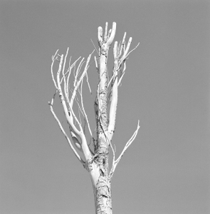Dead Forest 10
