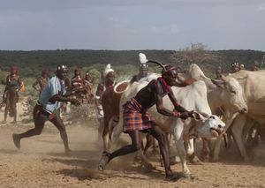 Bull-Jump Ceremony:  A difficult and dangerous struggle.