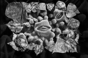 Poplar Stomata