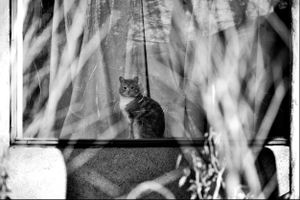 Cat in a Window, Taos, N.M. (b&w version)
