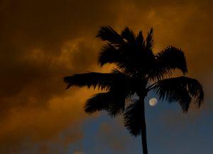 Moonrise Palm