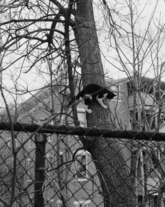 Untitled (Cat in tree)