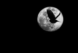 Full Moon - April 2020