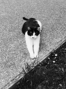 Stray Cat 16