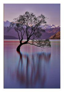 'The Wanaka Tree', Lake Wanaka