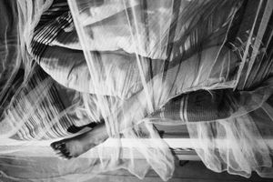 the mosquito net