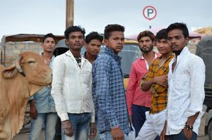 Indian crew and cow