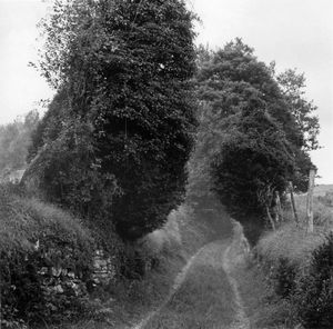 Path. Barcus.