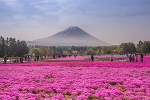Dress up Mt Fuji