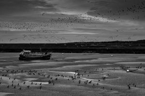 © Omar Parada Martinez