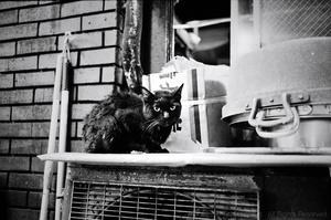 Cat, Shinjuku, Kabukucho