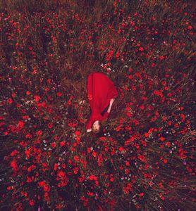 Poppies planet