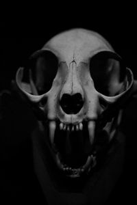 Skull (From Exhibit, San Francisco Science Museum)