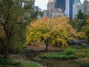 Fall Tree View