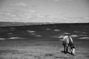 A Horse in Prairie Dog Town